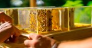2Beekeeping Made Easy With a New Compact Hive Built for Urban Settings5